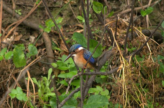 Woodbury Tented Camp, Amakhala Game Reserve: Boat Safari