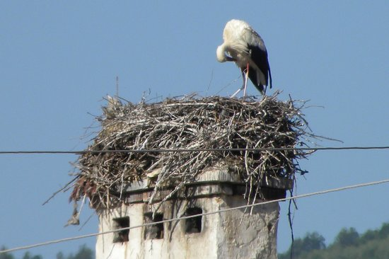 Secret Transylvania Guest House: The local stork