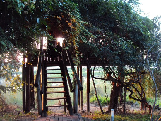 Ngwenya Lodge: The Hide mentioned in review