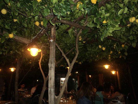 Pizzeria Donna Stella: Pergola di limoni