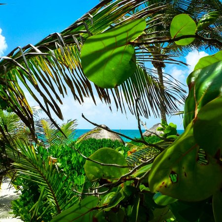 Playa Selva : Loved the gardens