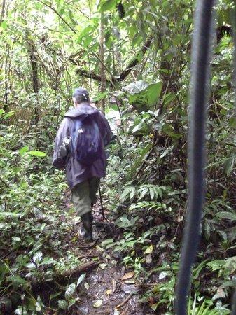 La Selva Amazon Ecolodge: Selva
