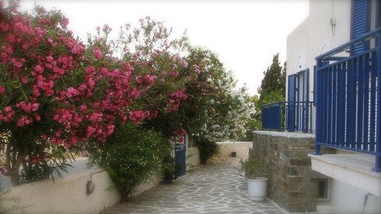 Alexandros apartments: Garden