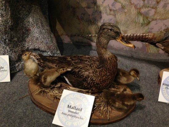Durango Fish Hatchery and Wildlife Museum