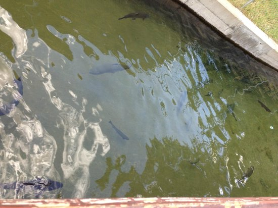 You will never get this close to a live badger picture for Durango fish hatchery