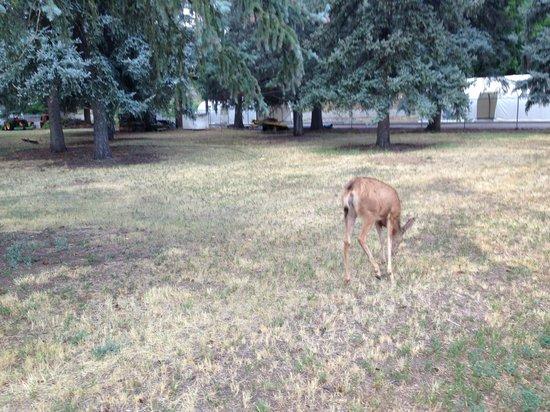 Durango Fish Hatchery and Wildlife Museum: deer in the ranger's yard
