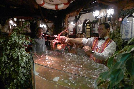 Casa Madeirense Restaurante : Mmm, fresh lobster