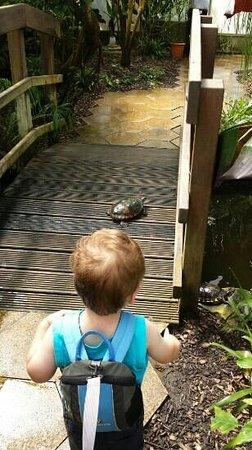Manor Heath and Jungle Experience: jungle experience