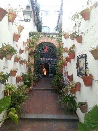 El Caballo Rojo: Preciosa entrada al restaurante haciendo honor a los patios cordobeses