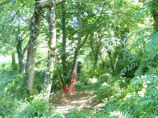 Anglesey Tipi and Yurt Holidays : Hammock in the woods