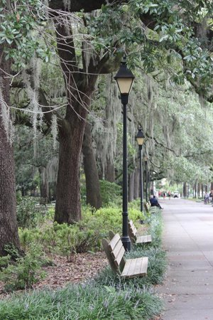 Renaissance Charleston Historic District Hotel: Gorgeous street lined trees
