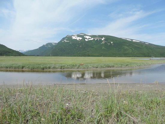 Alaska Homestead Lodge: The view