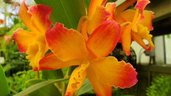 Sherman Library & Gardens: Orchids