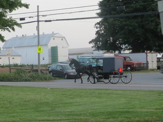 Days Inn & Suites Lancaster: Amish hestevoge