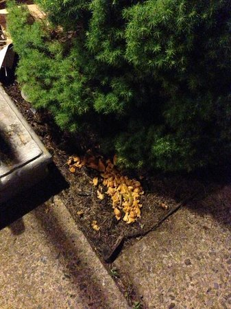 Bangkok Thai Cuisine: Food thrown in yard from delivery person