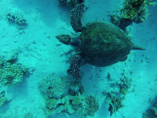 Only One Apnea Center : une des tortues du jour