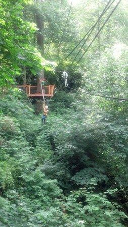 Canopy Tours Northwest: Zipping!