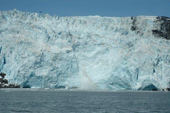 Alaska Saltwater Lodge & Tours: glacier calving