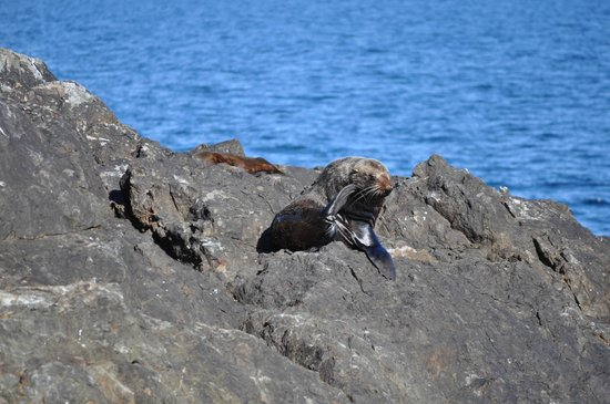 Fullers GreatSights Bay of Islands Day Tours: Soaking up the sun - seals