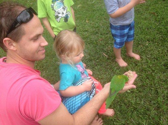 BIG4 Forest Glen Holiday Resort: Bird feeding