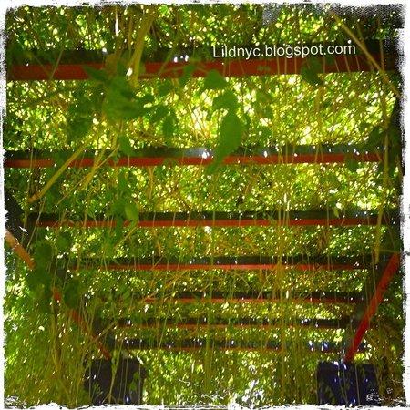 Jardin Majorelle: Greenery