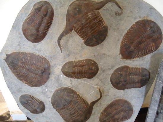 Macro Fossiles Kasbah: primitivos