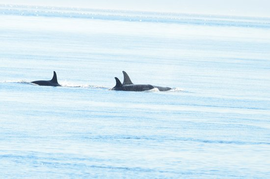 Lime Kiln Point State Park : Amazing to see and hear the orcas
