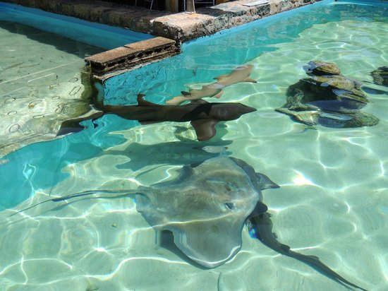 Shark Tank Picture Of Coral World Ocean Park Smith Bay Tripadvisor