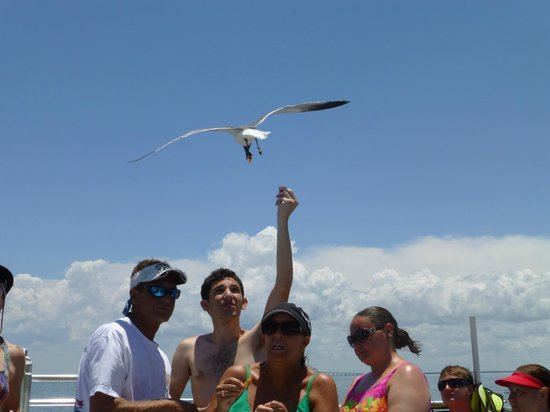 Island Boat Adventures : Feedind the birds