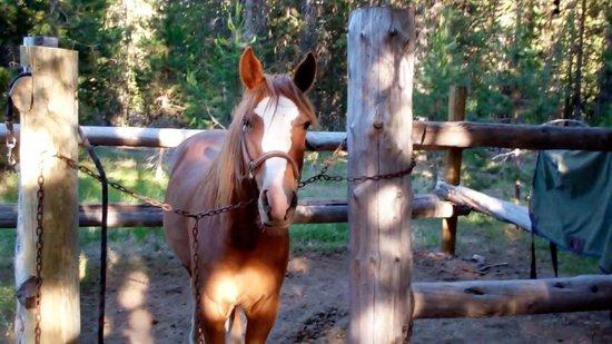 Cultus Lake Resort: Camping at the Cultus Horse Camp