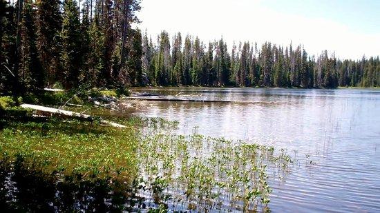 Cultus Lake Resort: Horse ride into nearby Lemish Lake