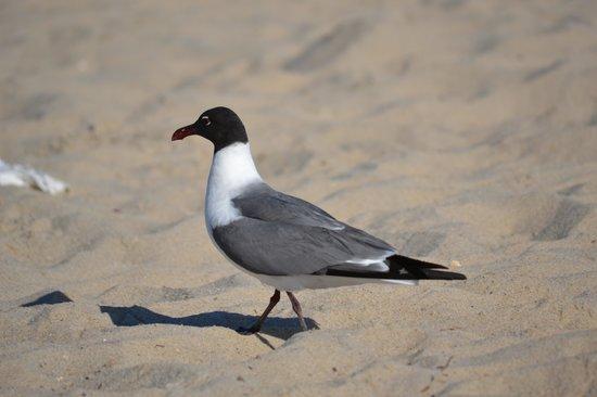 Lewes Beach: Bird on the sand
