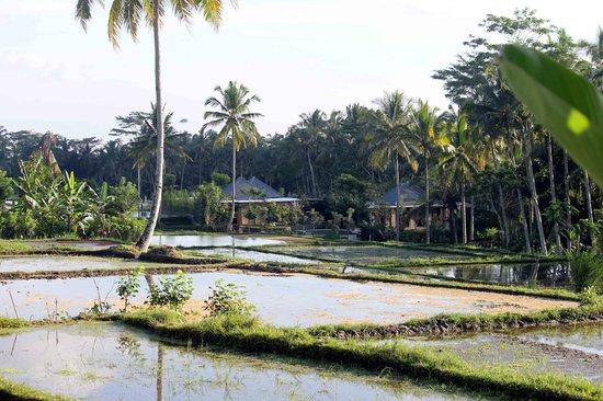 Ubud Syailendra Villas : View from the Villa