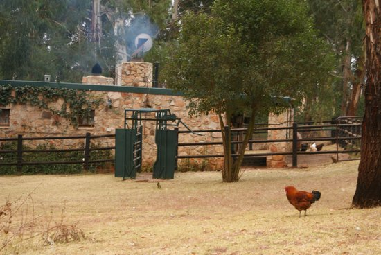 Elands Valley Private Bird & Game Sanctuary: The back of Strawberry fields