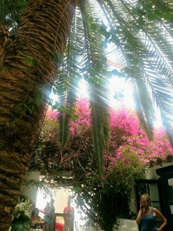 La Brasa: Eten onder een boom