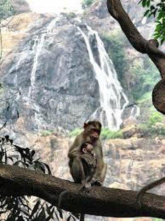 Monkey Falls: Monkeys nearby