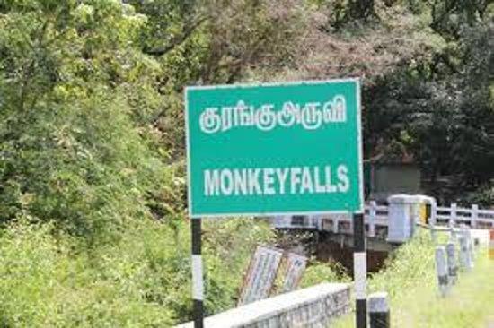 Monkey falls