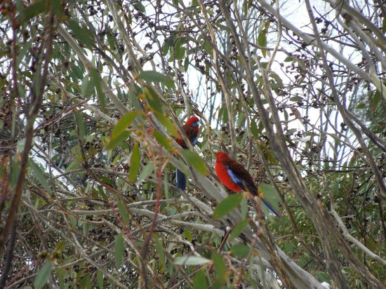 Trackers Mountain Lodge: Balcony Rosella's
