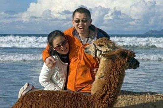Alpaca Beach Walk: yingchao and teller