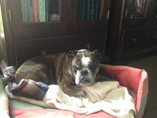 Cathkin Cottage Bed and Breakfast: Winston!