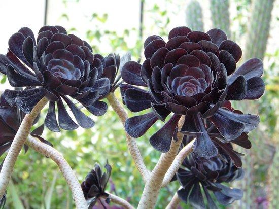 Plante grasse photo de jardin botanique et exotique val for Plante exotique jardin