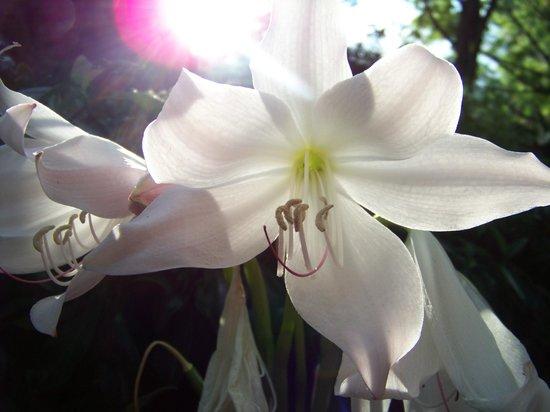 ombre et lumière du jardin - Picture of Menton, French Riviera ...