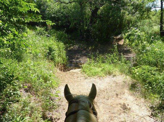 Widowmaker Trail Rides: grapevine lake widomaker trail rides