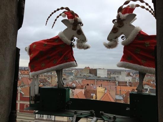 Koziolki Poznankie Ratusz: Santa Goats