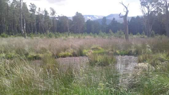 Silverglades Holiday Homes: Mountains and Marsh . Aviemore cycletrack 2013
