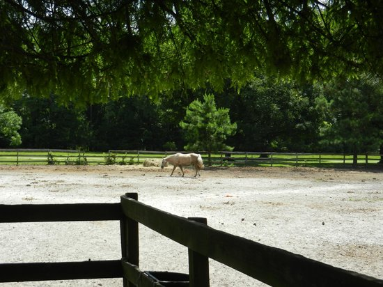 Inlet Point Plantation Stables: Field by barn