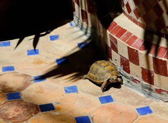 Riad Eva: Riad Tortoise