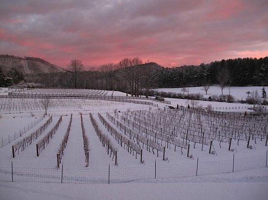 "Stonewall Creek Vineyards: Winter sunrise over ""sleeping"" vines."
