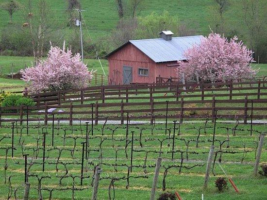 Stonewall Creek Vineyards : Crab apple trees in bloom.