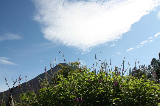 Arenal Observatory Lodge & Spa: butterflies in front of volcano